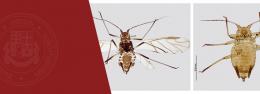 ილიაუნის ზოოლოგიის ინსტიტუტის პროფესორმა ბუგრის ახალი სახეობა აღწერა