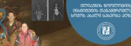 ილიაუნის ზოოლოგიის ინსტიტუტის თანამშრომლებმა ხოჭოს ახალი სახეობა აღწერეს