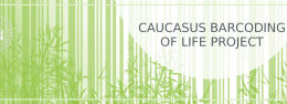 Caucasus Barcoding of Life Project