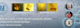 გვარის Nemaspela ორი ახალი სახეობის აღწერა საქართველოს მღვიმეებიდან